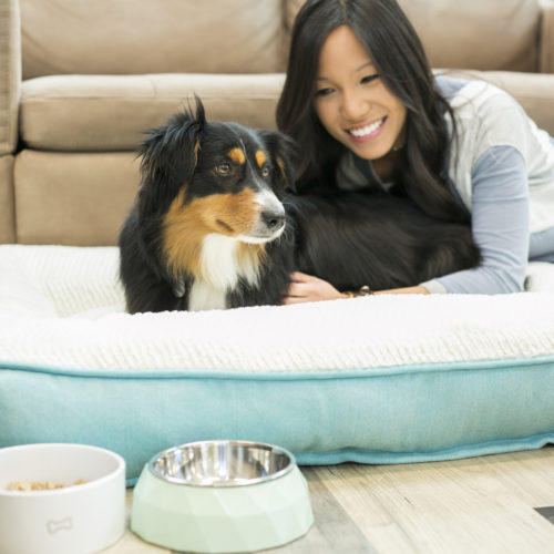 Yuck! Nearly One-Third of Pet Parents Are Unaware Pet Toys Collect Dirt, Bacteria, Yeast and Mold