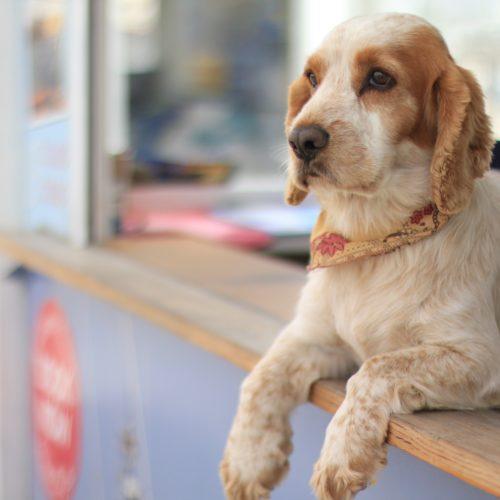 5 Must Follow Dog-Friendly Instagram Accounts