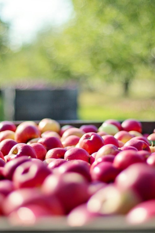 The Benefits Of Organic Gardening