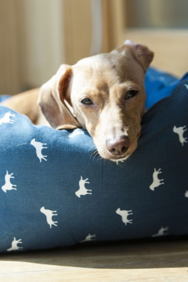 How To Protect Your Dog From Joint Pains