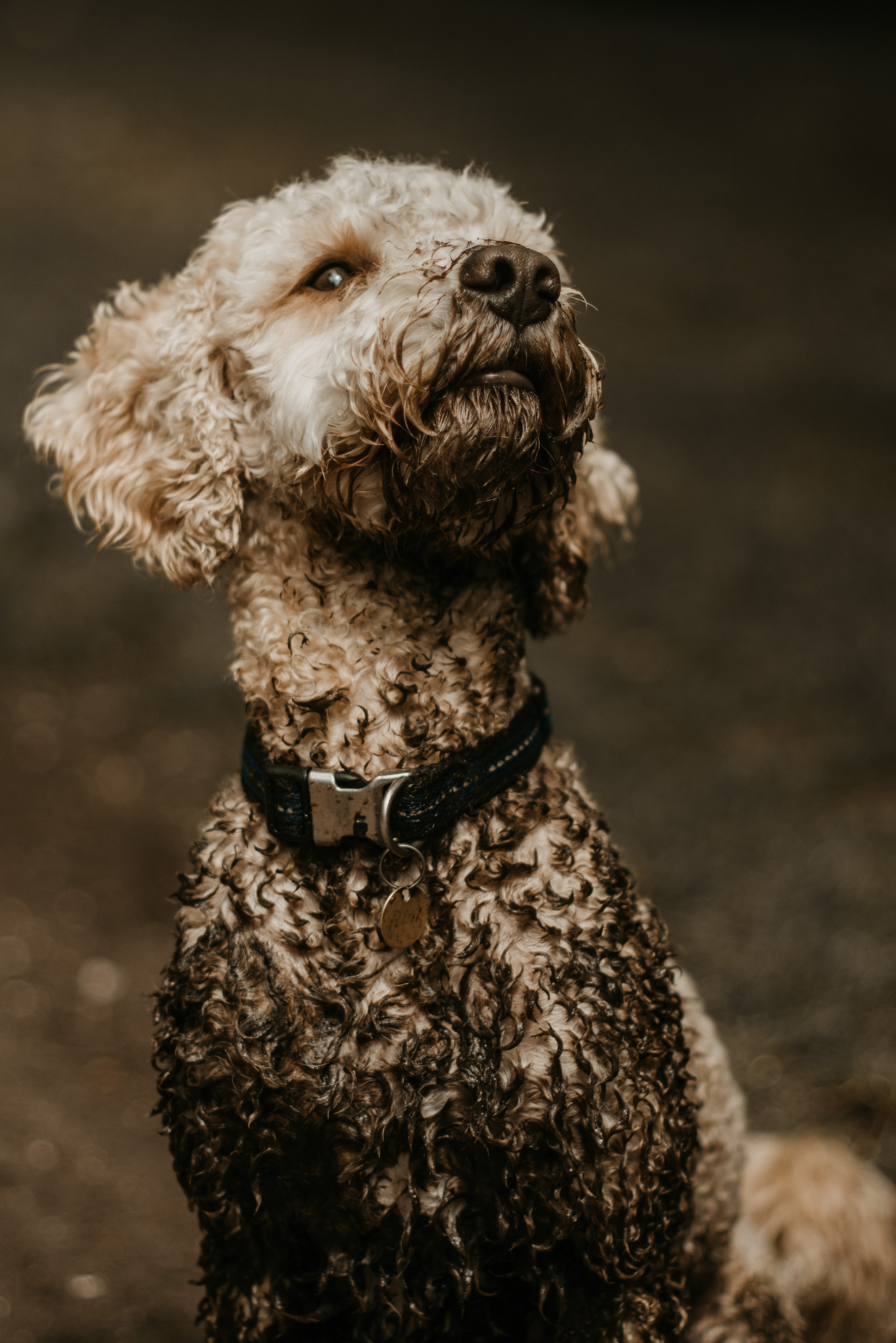 Finding The Best Products For Your Dirty Dog