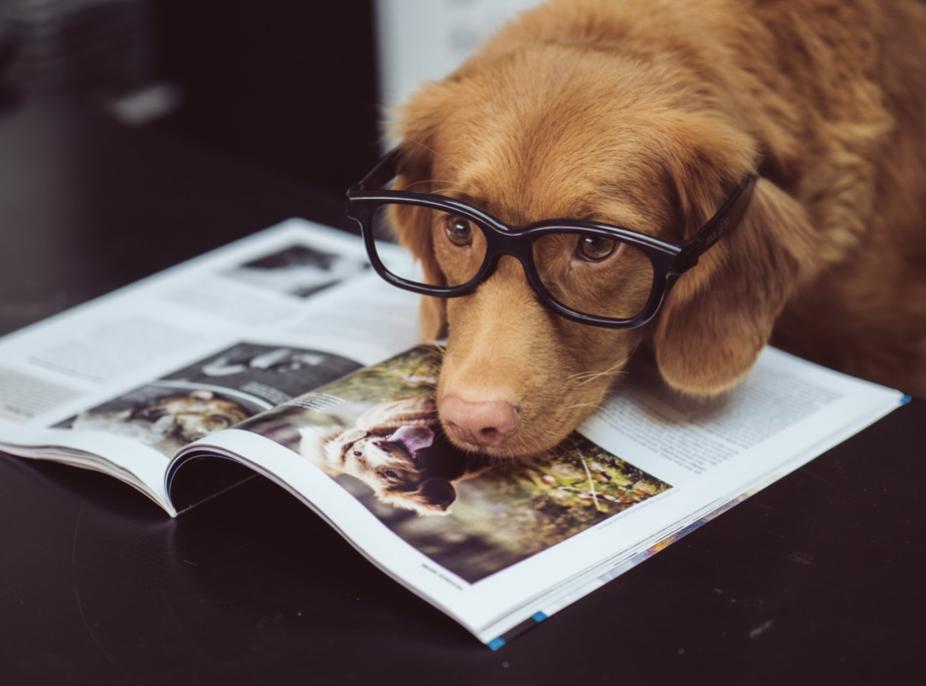Choosing Your Dog Breed