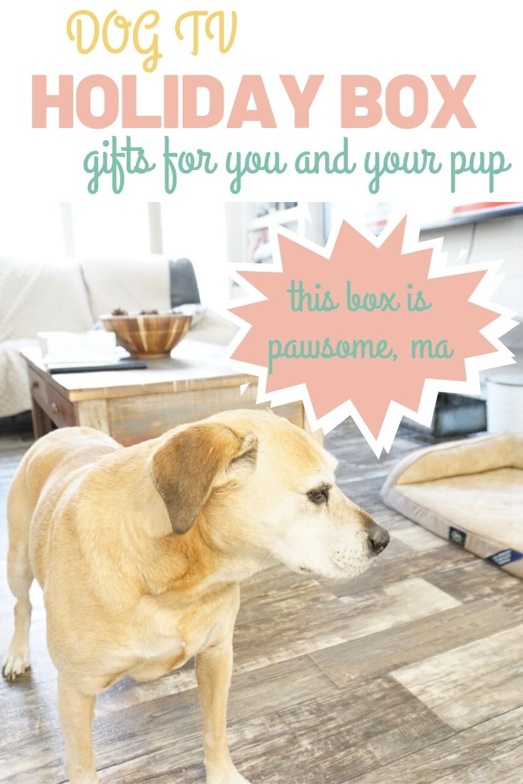 DOGTV Holiday Box